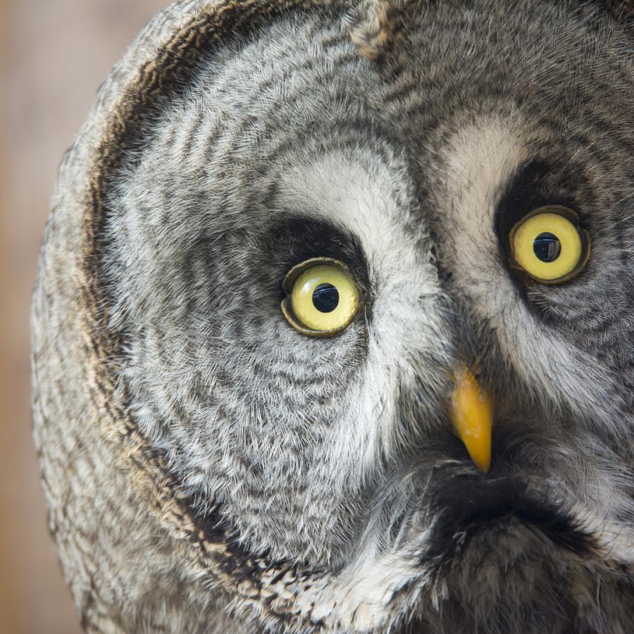 Olching Vogelpark
